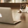 はてなブログのアクセス数が急激に増えた!その方法とは?