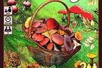 【ルール紹介】フンギ(Fungi)【レビュー】