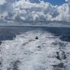 33歳の7月 沖縄旅行記5日目①~クエフ島で二度目のシュノーケリング