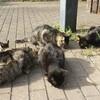 あれ?猫が増えてる?