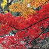 北の丸公園紅葉状況(2016/11/28)