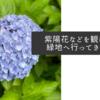 紫陽花などを観に鶴見緑地へ行ってきました
