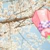 spring has come!〜絵本棚を設置したコトなど〜