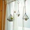 100均グリーンインテリアDIY エアプランツを窓辺に吊り下げてワイヤーハンキングやってみた