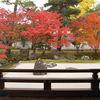 庭園18 相国寺開山堂庭園「龍渕水の庭」 夢窓疎石の眺める庭園