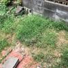 庭の雑草に除草剤をまいてみた