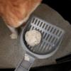 猫の可愛いさとその特徴−1@テメキュラ、CA