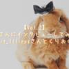 【Vol.2】うさ飼いさんにインタビューしてみました!(@rabbit_lilirysさんとくりおくん編)