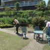 庭の掃き掃除 ツルボをイワジャシンの花