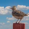 🦜野鳥の回【144】野鳥たちが季節を知らせる