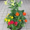 道の駅で花を買う