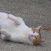 9月11日 松島から東四つ木の猫さま散歩 とその情景