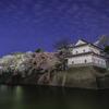 新発田城址公園で夜桜を撮影してきたお話