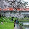 日産リーフでおでかけ 花と電車 が楽しめる 新境川桜並木 【東海ドライブ】
