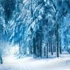 【無料/フリーBGM素材】銀世界、永遠の冬、凍える森『Winter Forest』アンビエント
