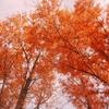 晩秋から冬に