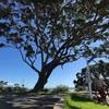 ニュージーランド旅行記13 グレートバリア島 トライフェナにあるアイリッシュ・パブへ!