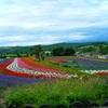 北海道、美瑛の展望花畑「四季彩の丘」、いつ行っても感動する美しさ。