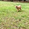 【愛犬と散歩】〜ワンコとお出掛け〜