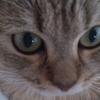【ミヌエット】猫の日*ニャンニャンニャン動画祭り