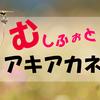 あ、虫みっけ!むしふぉと!秋の虫【アキアカネ】の写真をパシャリ