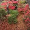 まだまだ秋色 函館公園…