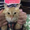 ココちゃんブログが1周年を迎えました!!2年目もよろしくニャ~(^^♪(357日目)