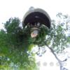 美しい日本庭園を360写真でみれます  #360pic