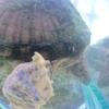 私は亀を飼っています。