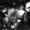 今日の1枚 #19 雨に濡れる花一輪