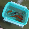 青梅の室内釣り堀 フィッシングセンター魚魚