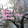 【函館お花見】五稜郭ならバーベキューが絶対オススメ!