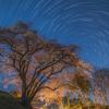 【天体撮影記 第52夜】 埼玉県 鉢形城のエドヒガンザクラと北天のポラリス