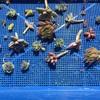 「多肉植物」の寄せ植えに挑戦