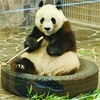 パンダに会いに@王子動物園