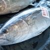 2021年4月2日 小浜漁港 お魚情報