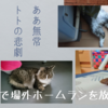 ああ無常、トトの悲劇 ~トイレで場外ホームランを放った猫~