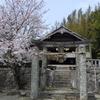 桜巡り 〜 老松神社 〜