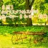 【花・自然】滋賀のオススメフォトスポット〜ローザンベリー多和田〜前編