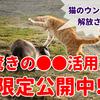 糞対策は撃退から!?野良猫を安全に追い払う秘訣徹底公開