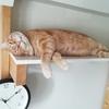 すやすや寝る猫の癒やしパワー