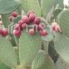 サボテンのトゲは何のためにあるのか!乾燥地帯で生きぬく植物の知恵!