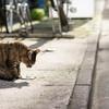 ここはネコ通り?ネコさんだらけの路地に迷い込んだ