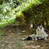日陰の中でくつろぐ猫
