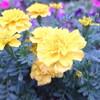 いろんなお花が、ちょびっとずつ咲いているのが心地いい