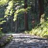 今年中に行きたい場所~大神山神社~