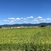 """畑からこんにちは! 0915   """" もうじき秋ですね…🍁   """"   秋の野菜・楽しい家庭菜園!"""