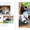 猫たちの住環境と福利厚生について考える。