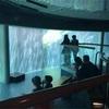 バイオドームで出会った生き物(その3・海と空)