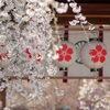 京都の桜を巡る旅2008・名所・穴場〈平野神社・蹴上・木屋町・祇園〉2008年4月4日(金)
